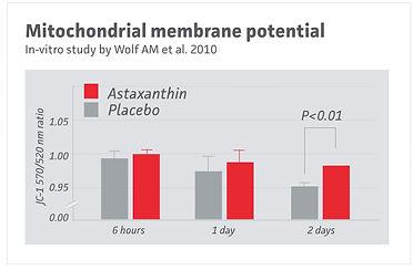 Chart of a mitochondria membrane vitro study