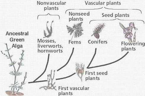 greenplantdiversification.jpg
