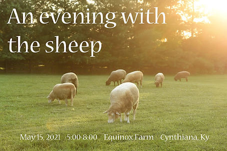 evening with the sheep web-1.jpg
