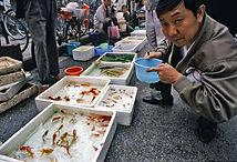 Independent, China, Yunnan, Kunming, Travel, Tourism,