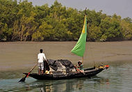 Sundarbans, West Bengal, India, Tigers, Culture Trip,