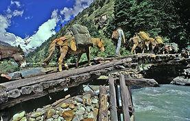 Telegraph, Bhutan, Laya Trek, Laya, Trekking, Travel, Tourism,