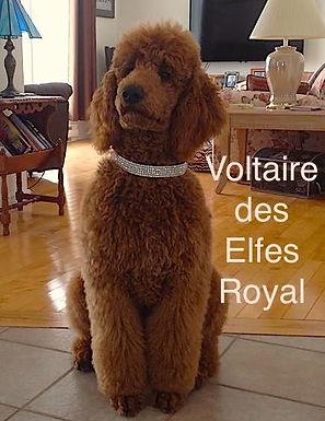 Voltaire .jpg