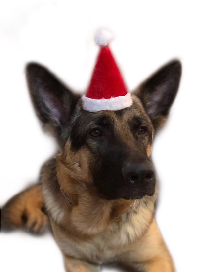 Party Pup Christmas Hat
