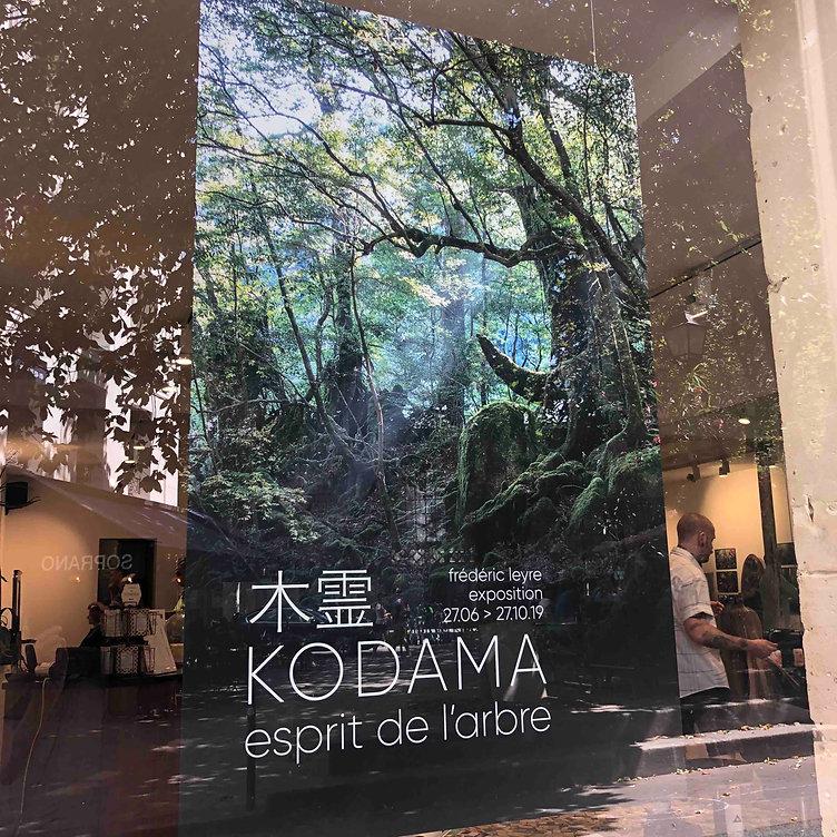 KODAMA ESPRIT DE L'ARBRE FREDERIC LEYRE PHOTO FOREST JAPAN YAKUSHIMA EXPO EXHIBITION EXPERIENCE NATURE CONNEXION