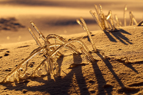 Blank Card with Envelope - Frozen Beach Grass at Sunrise