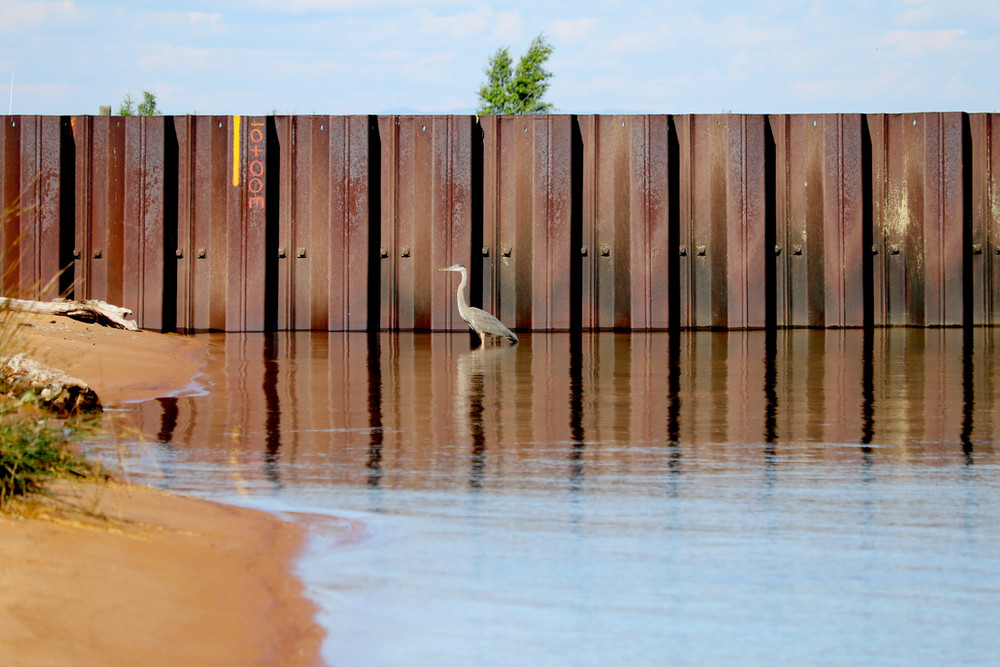 Great Blue Heron - Lake Superior
