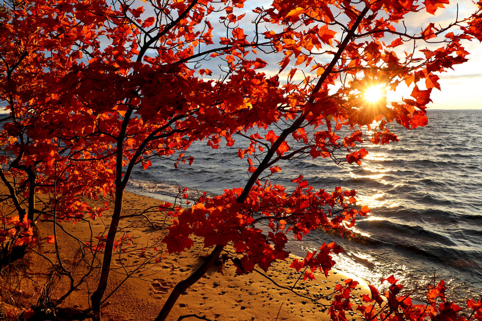 Red Maples at Sunrise