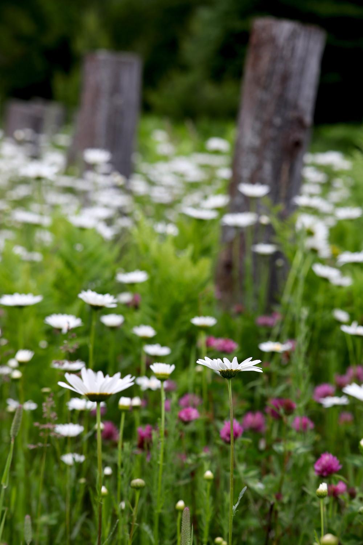 Vermilion Wildflowers