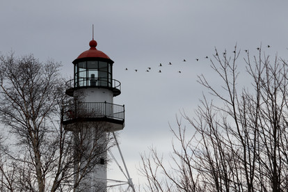 Sandhill Cranes Fly by Whitefish Point Lighthouse