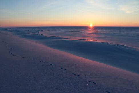 Coyote tracks at Sunrise