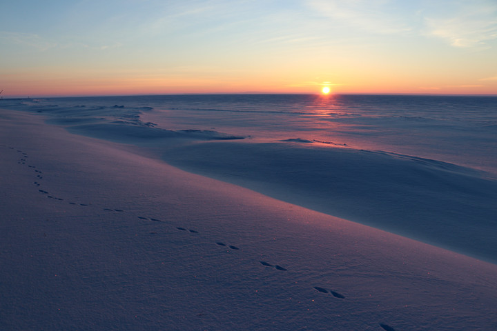 Coyote tracks at Sunrise