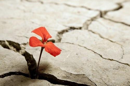 Encontrar tu esencia sanando el trauma