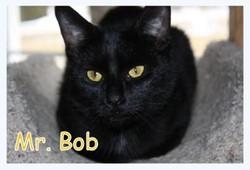 mr bob