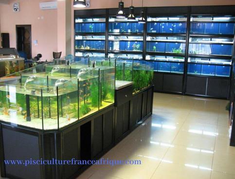 Aquariophilie (clé en main), Pisciculture France Afrique
