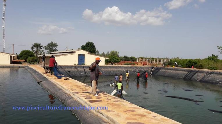 Pêche en étang, Pisciculture France Afrique