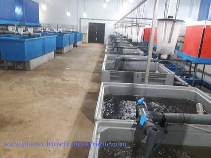 Écloseries modernes destinées à produire des œufs, des larves et des alevins, Pisciculture France Afrique