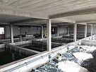 Systèmes de recyclage des eaux usées, Pisciculture France Afrique