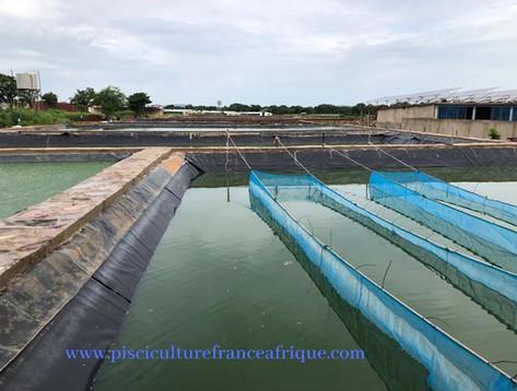 Projet piscicole élevage de poissons Pisciculture France Afrique