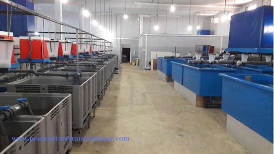 Fournisseur matériels et équipements Écloseries aquacole, Pisciculture France Afrique
