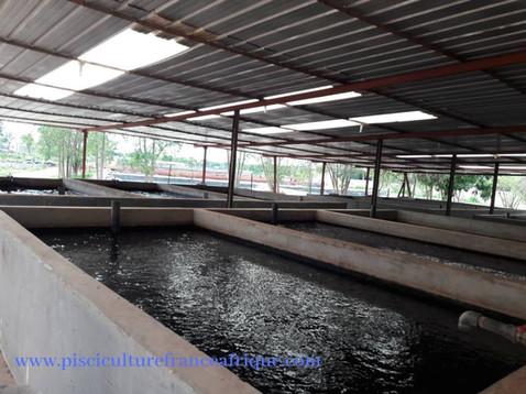 Elevage de poissons Pisciculture France Afrique