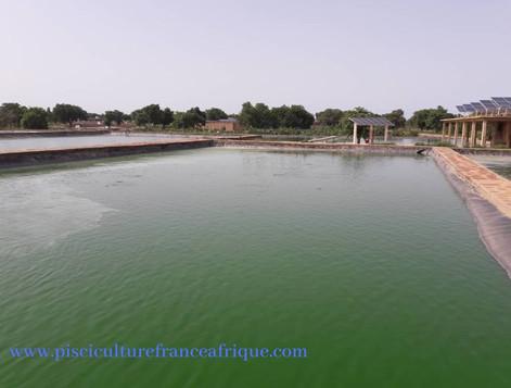 Étude de faisabilité ferme piscicole Pisciculture France Afrique
