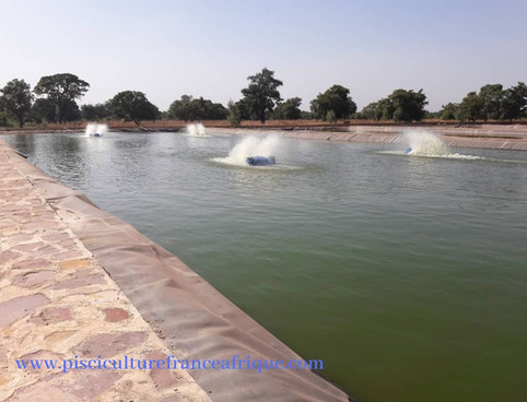 Aérateur des étangs d'élevage de poissons, Pisciculture France Afrique