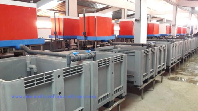 Systèmes de recyclage des eaux RAS, Pisciculture France Afrique