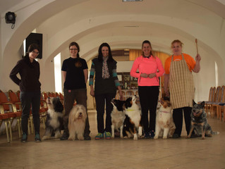 Dog Dancing training in Hatvan by Nóra Karlyik