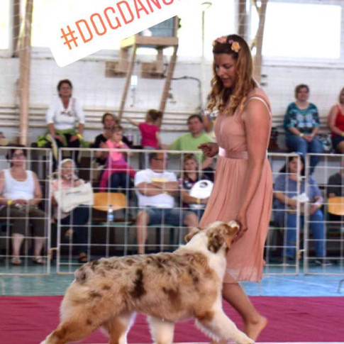 On our first dog dancing competition in HTM category