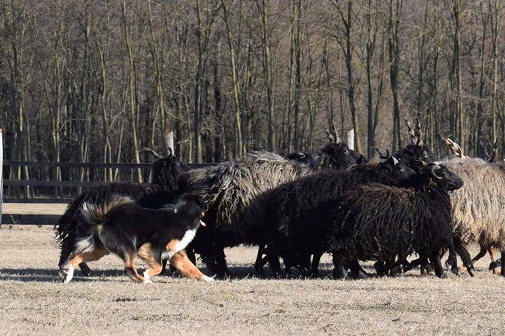 Mystic & herding