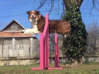 Back to agility with Mika girl, focus jump training