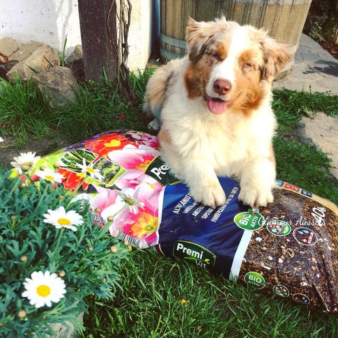 Little gardenhelper Chanel