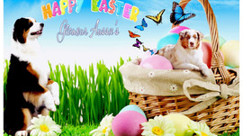Happy Easter from Glamour Aussies