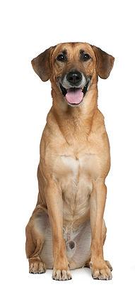 St Louis Dog Sitter