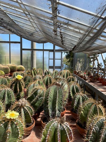 Il giardino esotico Pallanca....dove il verde delle piante si immerge nel blu del mare