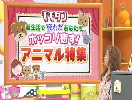 2018.4.21 読売テレビ「あさパラ!」モモタンのコーナーでチューチュータイマーが紹介されました!