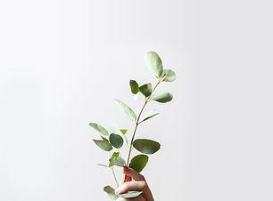 Hand Holding Branch