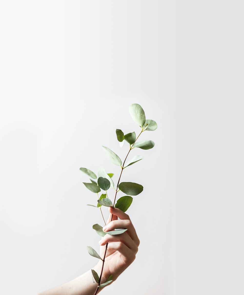 hand holding branch with leaves