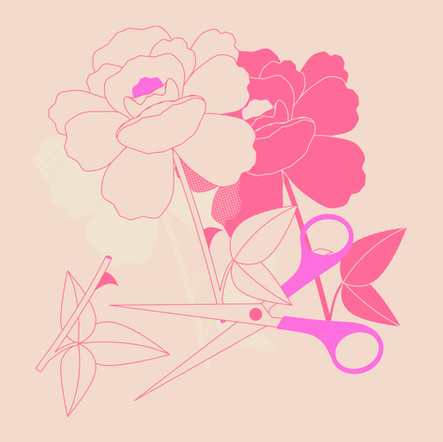 THORNS AMONG ROSES LUCILE BASSO GRAPHISTE & ILLUSTRATRICE FREELANCE PARIS TOULOUSE