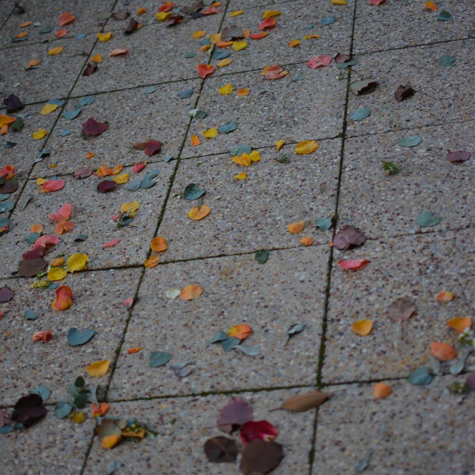 petal & leaf confetti