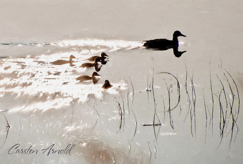 Duck Family Reflections
