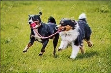 dogs%2520playing%25201_edited_edited.jpg