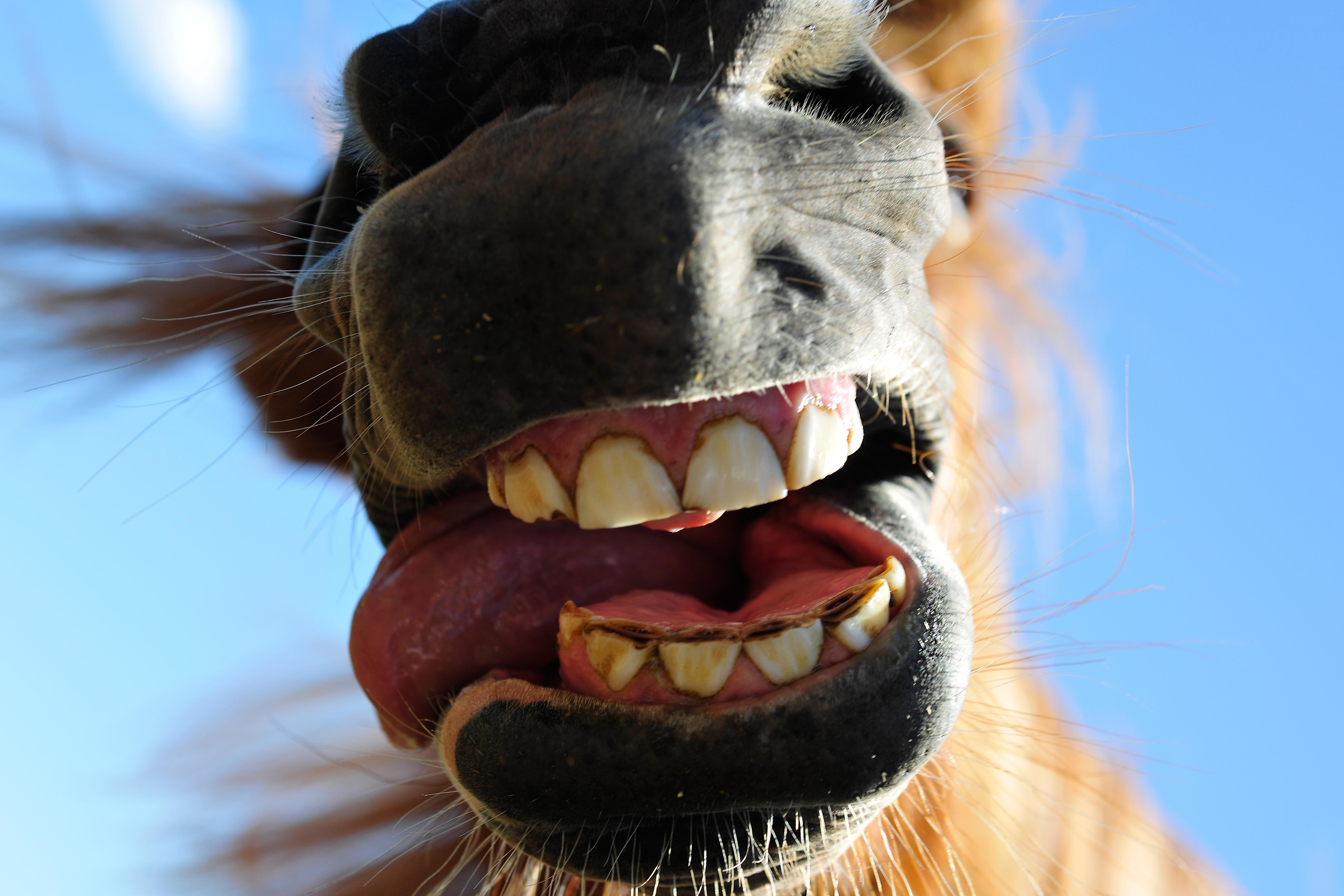 HorseByLeoGesess