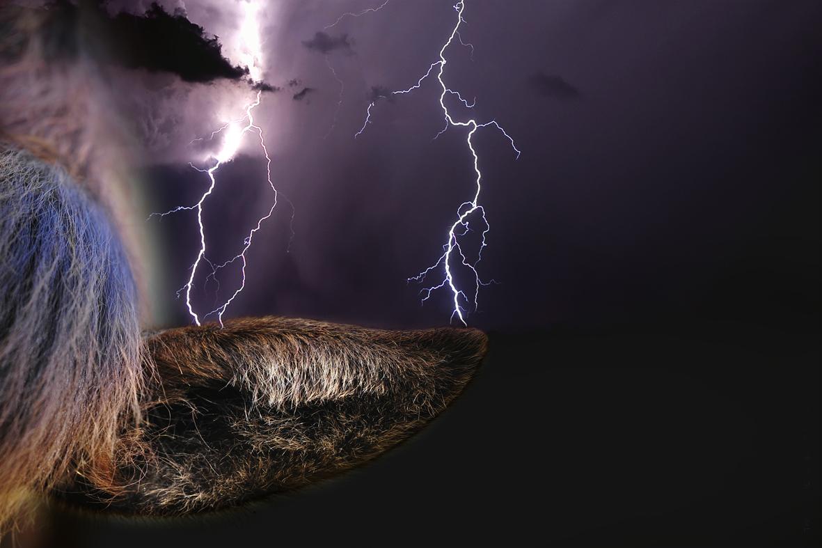 thunderhorses_4