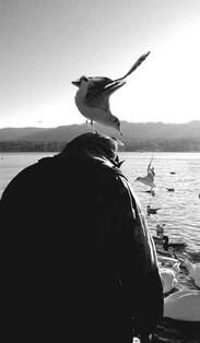 gull by Leo Gesess Photographer Switzerland www.comcom.ooo