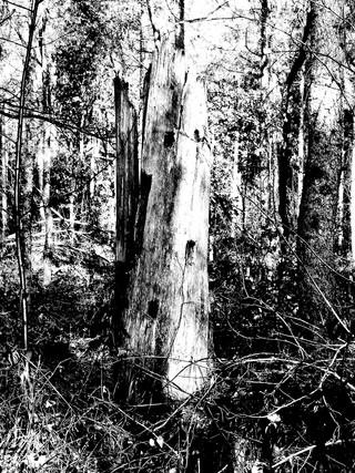 tree structure by Leo Gesess Photographer Switzerland www.comcom.ooo