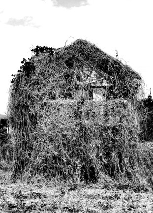 hounted house by Leo Gesess Photographer www.huawei.com