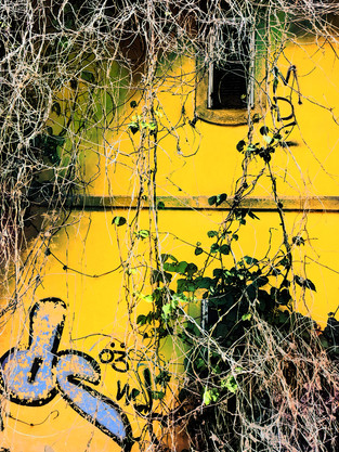 yellow house by Leo Gesess Photographer0522_222135.jpeg