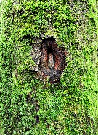 tree hole by Leo Gesess Photographer Switzerland www.comcom.ooo
